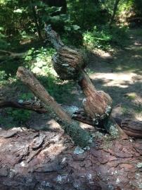 Knobby Wood