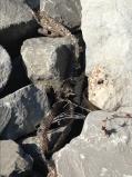 latimer snake skin