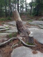 Stone Mountain Crazy Wood