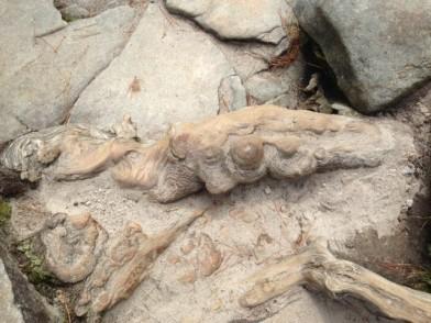 Stone Mountain root