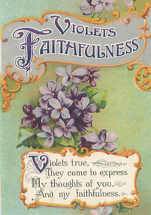 Violets Faithfulness (2)